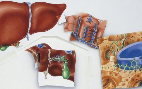 肝脏恶性肿瘤