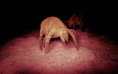 人体中有寄生虫怎么治疗