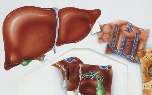 肝硬化的早期症状 怎么检查出来