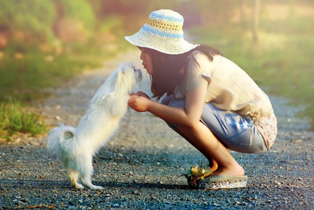想养宠物又害怕狂犬病 怎么不纠结